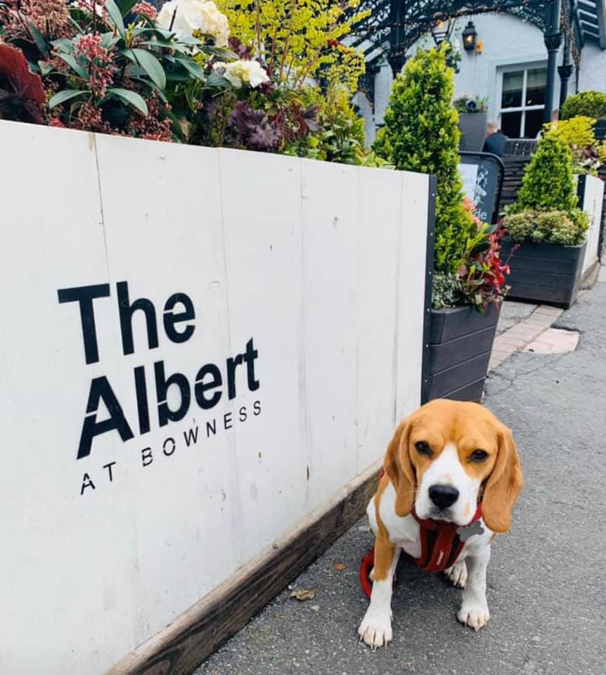 The Albert Hotel